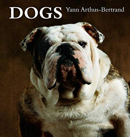 Dogs Cover