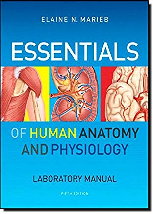 Essentials of Human Anatomy & Physiology Cover