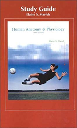 Human Anatomy & Physiology (Study Guide) by Elaine Nicpon Marieb (2000-07-03) Cover